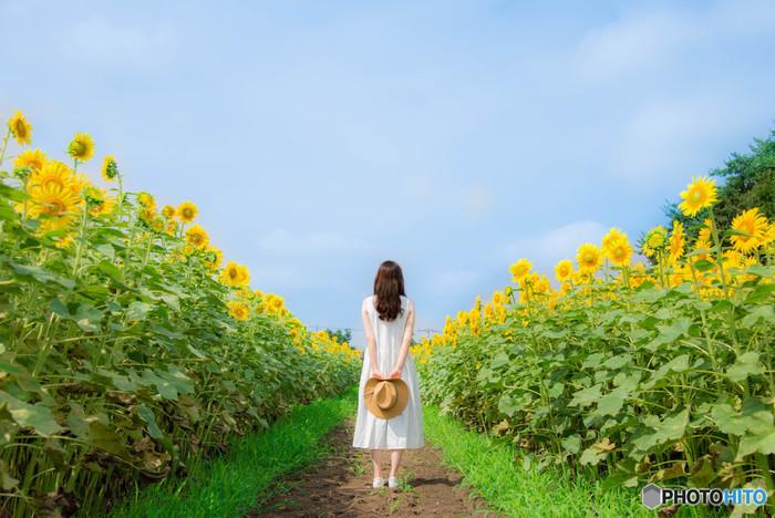人物と一緒に撮影する時も、ぜひ夏らしい格好で。ひまわり畑の中で写真映えし、きっと喜んでもらえるはずです。