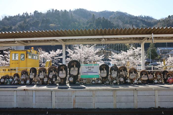 信楽高原鉄道の終点でもある信楽駅は、信楽町観光の玄関口となります。この駅では、たくさんの信楽たぬきたちが訪れる人々を温かく迎えてくれます。