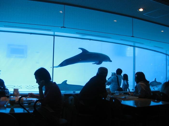 館内にはレストランがあり、店内の壁が水槽になっているため、イルカを見ることができるんです!大人も子供もわくわく♪
