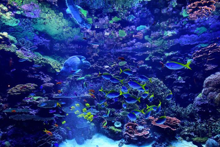 大分の県南のサンゴを日本で初めて人工照明での繁殖・飼育に成功しました。そんな水槽内には、色とりどりの美しい魚たちや巨大魚のナポレオンフィッシュも優雅に泳いでいます。