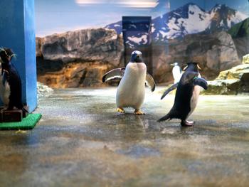 コガタペンギン、ヒゲペンギン、マゼランペンギ、イワトビペンギン、ジェンツーペンギン、ケープペンギン、キングペンギン、フンボルトペンギン、マカロニペンギンなど、どれも個性豊か。