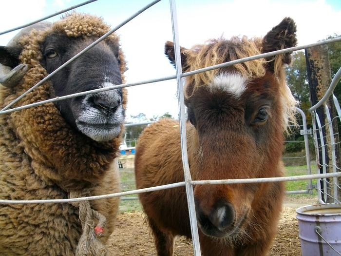 山田牧場では、牛乳やスイーツの原料を生産する乳牛はもちろんのこと、馬や羊、ダチョウといった大型の動物、人懐っこい小動物など様々な動物が飼育されています。動物園のような山田牧場は、お子様をお連れの方でも安心して訪れることができる観光スポットです。