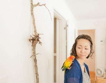 最近注目を浴びている流木や、大きな枝もの・ツルものは、そのまま大胆にディスプレイすればOK。  真っ白な壁ですっきりしたインテリアなら、大きめの乾いた流木や木の枝を、こんな風に、壁に立てかけるだけでも素敵です。  ※市販品ではなく、自分で拾った流木をディスプレイする場合には、よく洗浄しましょう。