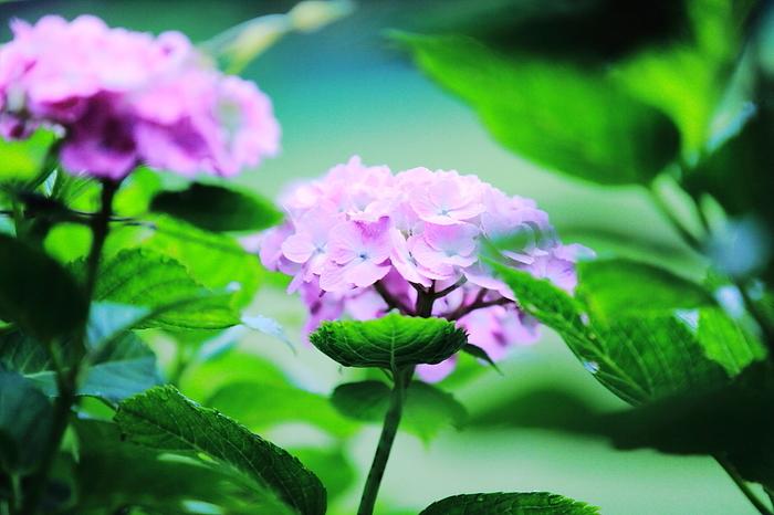 登山道には野生の草花もたくさん。ひっそりと咲く美しい姿は、登山ならではの楽しみでもあります。