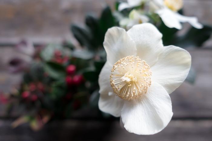 冬になると気温がぐっと下がり、一輪挿しを長く楽しむことができます。通年購入可能な花も、少し冬を意識して色選びをすると楽しいです。クリスマスローズはカラーが豊富。鉢植えのイメージのあるシクラメンは、一輪挿しでも可愛いですよ。