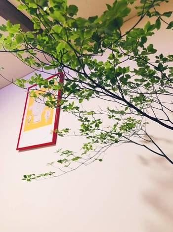 暑い季節でも長持ちし、涼しげな葉形とカラーが人気の枝ものです。枝ぶりの個性的なものを選んで、一枝を大胆に飾りましょう。空間にメリハリがついて、ぐっとセンスアップします。
