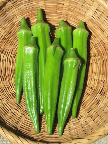 オクラに含まれるぬめり成分はペクチンという水溶性食物繊維で、整腸作用や血糖値の抑制に役立つと言われています。また、髪や皮膚の健康維持に欠かせないβカロテンや疲労回復効果のあるビオチンも豊富。ビタミンB群やカリウム、カルシウムなど、栄養がたっぷり詰まった緑黄色野菜です。