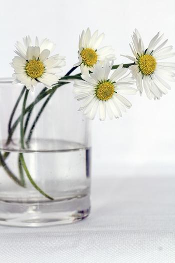 お花を長持ちさせるコツは、お水をこまめに替えること!いつも新鮮なお水を与えてあげるとお花も喜びます。