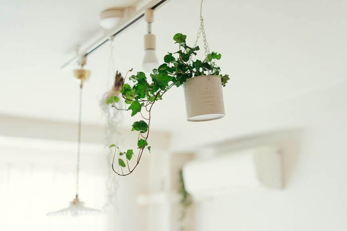 1灯では暗い場合、ライティングダクトがあれば追加の照明を取り付けることもできます。照明だけでなく植物やドライフラワーを吊るすなど、インテリアも楽しんでみて。
