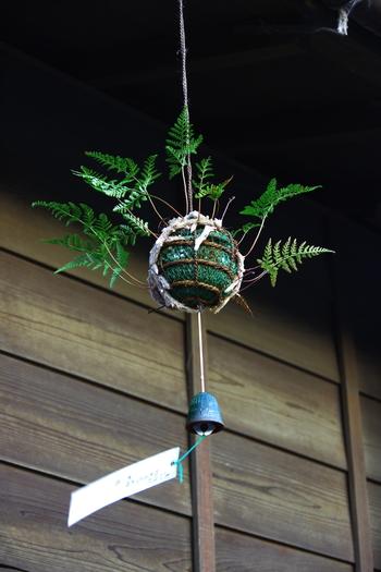苔玉と風鈴の組み合わせも風情がありますね。夏に涼しさを呼ぶ素敵なアイテム。インテリアとしてもおすすめです。