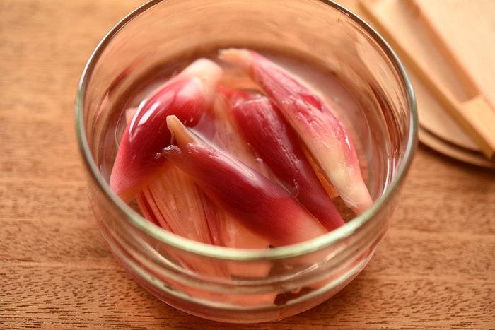 ピンクが可愛い「みょうがの甘酢漬け」。水気を切って酢飯に乗せればとっても可愛いお寿司の完成です。箸休めとしてもおかずの彩りにも使える一品です。