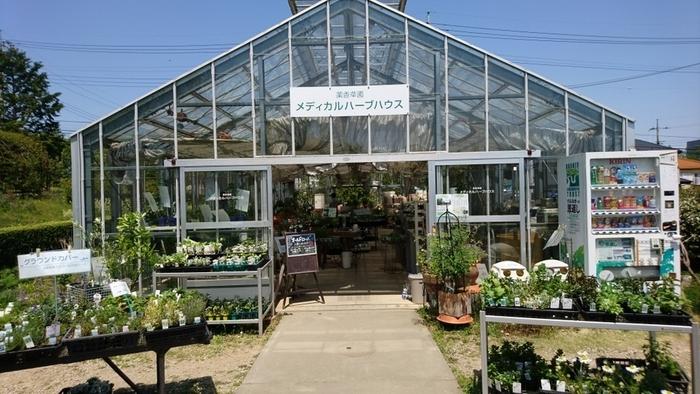 「メディカルハーブハウス」では、ガーデン内にあるメディカルハーブやキッチンハーブ、季節ごとの旬のハーブ苗など、年間300種類以上の苗を扱っていて、購入することも可能。栽培・収穫方法などもスタッフの方が親切に教えてくださるので、初心者さんも安心です。