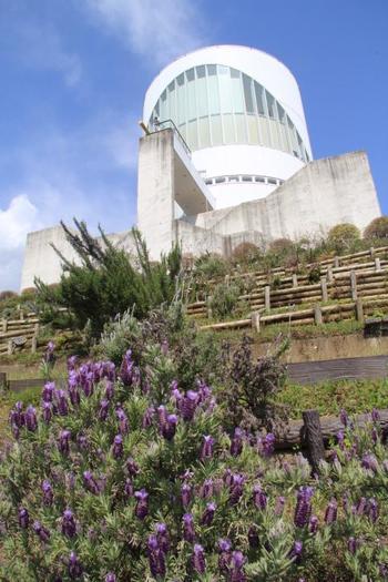 「松田山ハーブガーデン」は、大井松田インターから約5分ほどのところにある西平畑公園内にあります。約4,000平方メートルの広大な敷地には、さまざまなハーブが咲き誇り、あたり一面が良い香りに包まれています。