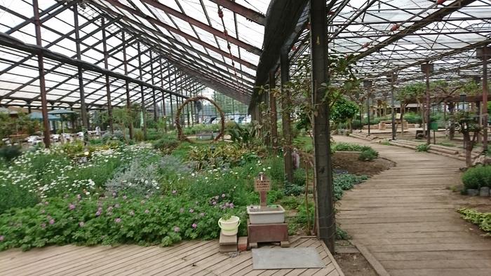 全天候型の室内ガラスハウスなので、雨の日でも楽しめますね。約4,500平方メートルの広大なハウスの中には、季節に合わせて200種以上のハーブや植物が植えられています。