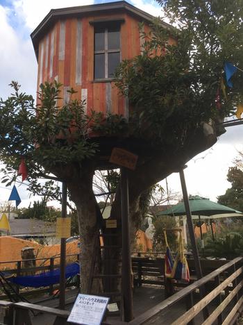 ガーデン内で目をひくのが、園内のシンボルである樹齢約80年のタブの木に作ったツリーハウス。時間制で貸し切ることができるので、お友だちやご家族と楽しみたいですね。