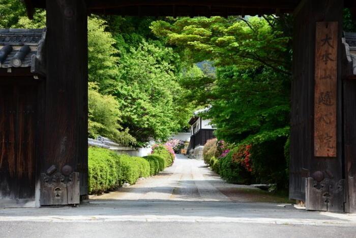 京都山科にある寺院で、小野小町ゆかりのお寺として有名な「隨心院」。小野小町の屋敷跡ではないかと伝えられ、境内に入ってみると小町が顔を洗ったとされる小町化粧井戸、貴族からの手紙を埋めたとされる小町文塚などの史跡が遺っています。また色彩豊かな襖絵があり見ごたえも抜群で、桜で人気の勧修寺からも近いので観光でも訪れやすいおすすめスポットです。