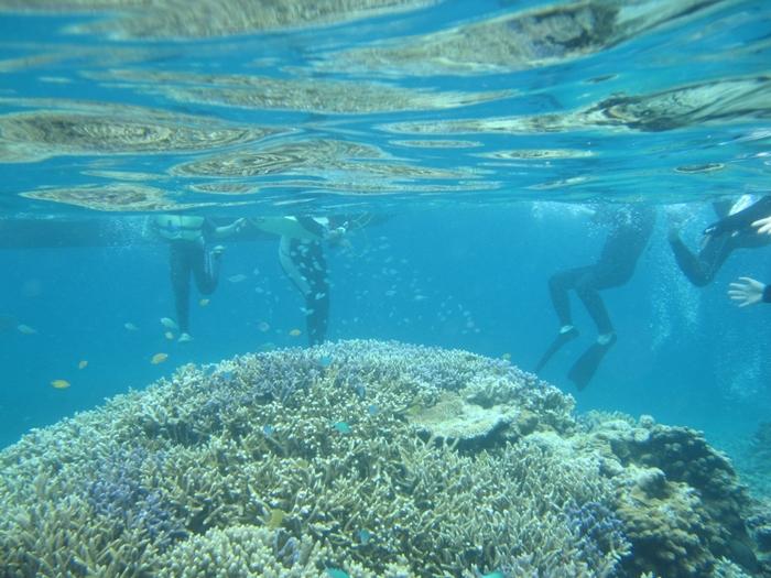 浜島周辺は恰好のシュノーケルスポットとなっています。色とりどりのサンゴがあり、可愛らしい熱帯魚たちが泳ぎ回る浜島の海の中は、まるで竜宮城のようです。