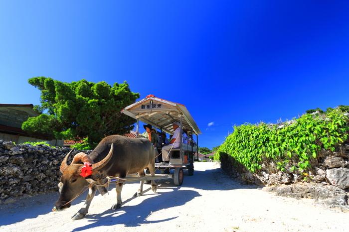 昔ながらの沖縄の原風景が広がる集落の中を水牛車がゆっくりと進んでいく様子は、映画のワンシーンのようです。