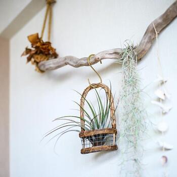 グリーンのハンギング、バスケットに入れたり、鳥かごに入れたりして飾るのも素敵です。S字フックを使えば、きがるに壁を飾ることができる。