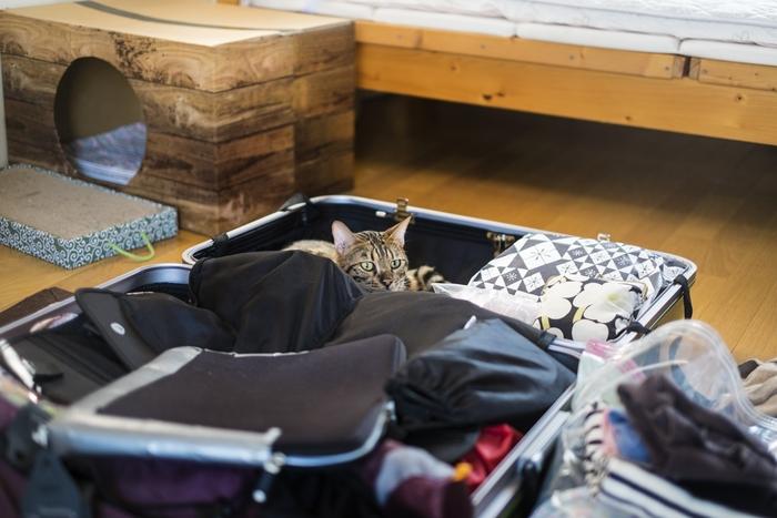 旅行の準備や、旅行から帰る前に大変な荷造り。行きは荷物が少なくても帰りに増えて困ってしまう。または季節によってはいつものスーツケースでは入らなかったり、海外旅行の場合は季節が違っていて大変だったりしませんか?