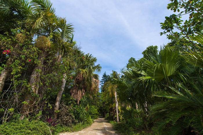 周囲約2キロメートルの由布島は、島全体が「亜熱帯植物楽園」となっています。巨大な植物園の中を散策していると、まるでジャングルの中を探検しているかのような錯覚を感じます。