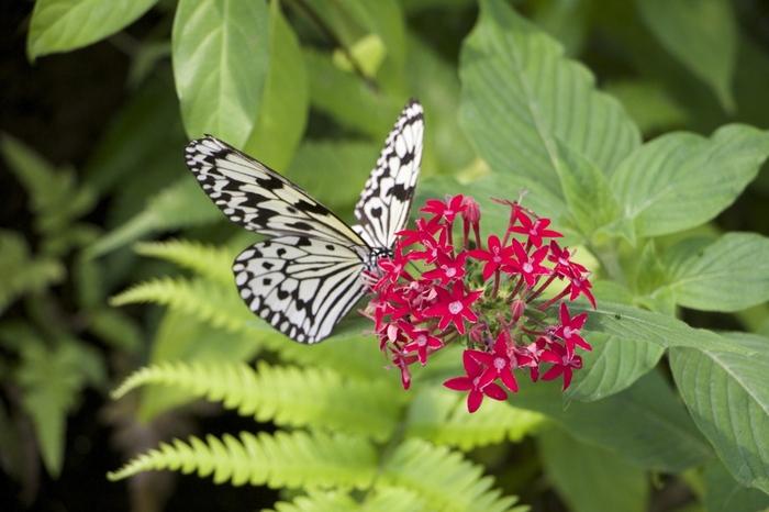 由布島では昆虫館も併設されています。ここでは色鮮やかな美しく珍しい蝶をたくさん見かけることができます。