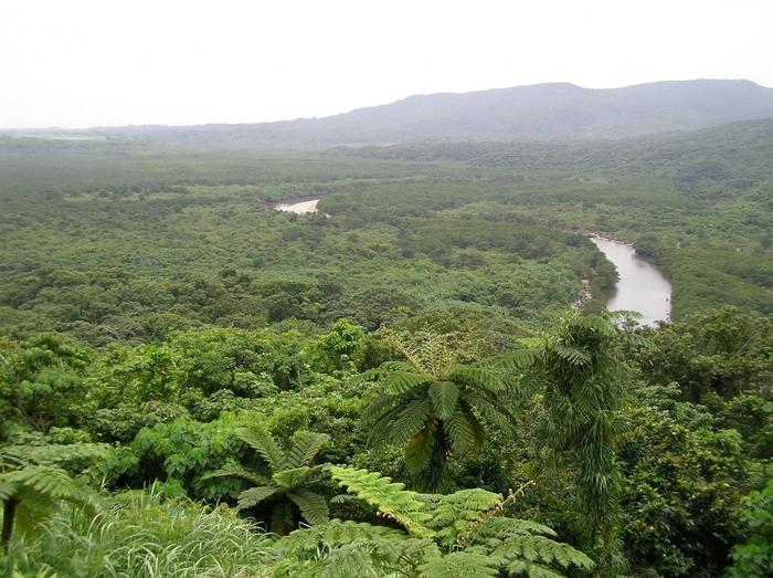 仲間川上流付近には展望台があります。眼下には豊かなジャングルが生い茂っており、まるで緑の絨毯を敷き詰めたかのような景色が広がっています。展望台からジャングルを眺めていると、まるで異国の秘境に足を踏み入れた探検家になった気分を覚えます。
