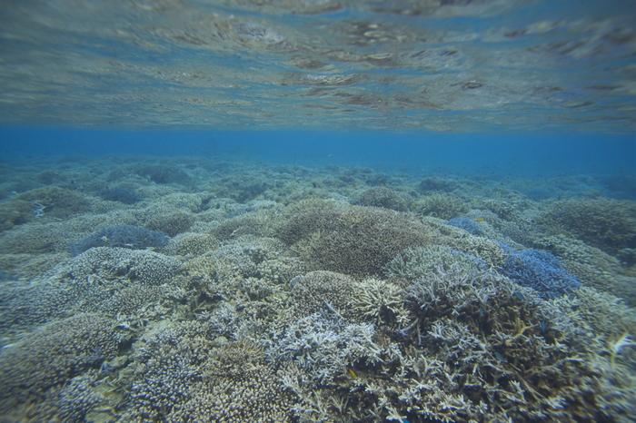 サンゴ礁に囲まれたバラス島は恰好のシュノーケルスポットとしても人気があります。海中では、様々な種類のサンゴ、熱帯魚たちを見ることができます。