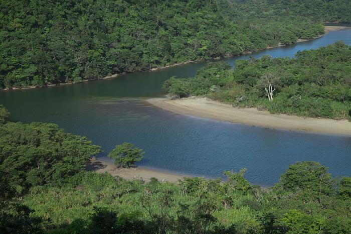 支流を含めると全長約39キロメートル、河口付近の川幅が約500メートルにもおよぶ浦内川は、西表島はもちろんのこと、沖縄県最大の河川です。河口付近には仲間川と同じく豊かなマングローブ林が生い茂っており、川に架かる浦内橋の展望台からはマングローブ林を一望することができます。