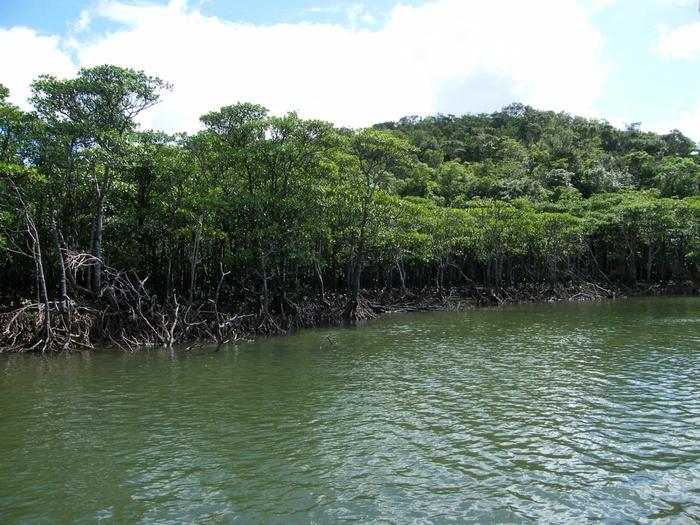 浦内川では、たくさんの遊覧船が出航しているほか、カヌーで川登りをすることができます。遊覧船やカヌーからは間近でマングローブ林を眺めることができるため、まるで秘境に足を踏み入れたような気分を味わうことができます。