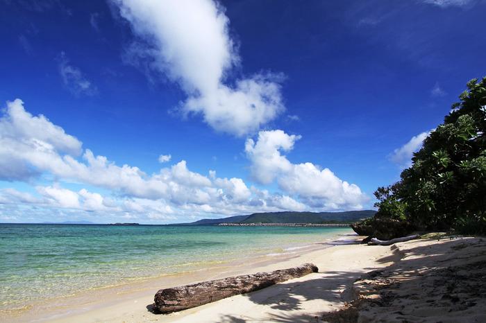 西表島の周囲には豊かな珊瑚礁の海が広がっています。亜熱帯の自然林が豊かに生い茂る西表島は、ジャングルクルーズのイメージが強いかもしれませんが、遠浅の透き通る青い海が広がる美しいビーチの宝庫でもあります。