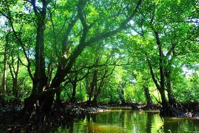 亜熱帯雨林のジャングルが広がる島を訪れよう!西表島でのおすすめ観光スポット11選