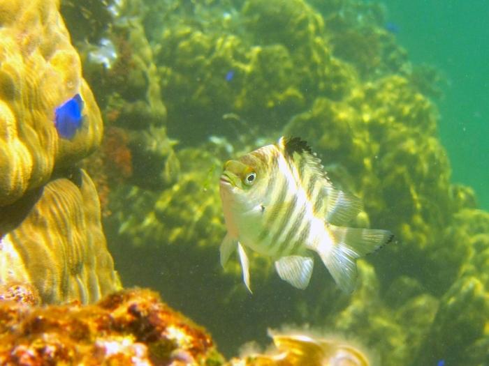 星砂の浜の海中では色とりどりのサンゴの間を可愛らしい熱帯魚たちが優雅に泳ぎ回っています。ここでは、魚たちの楽園を垣間見ることができます。