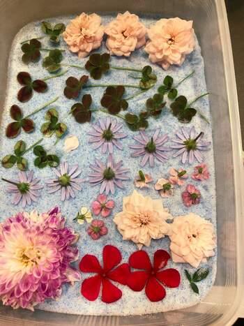 花首(茎を除いたお花の部分)だけの場合は、タッパーなどにシリカゲル(乾燥剤)を敷き詰め、そこにお花を差し込み乾燥させる、という方法もお手軽ですね。
