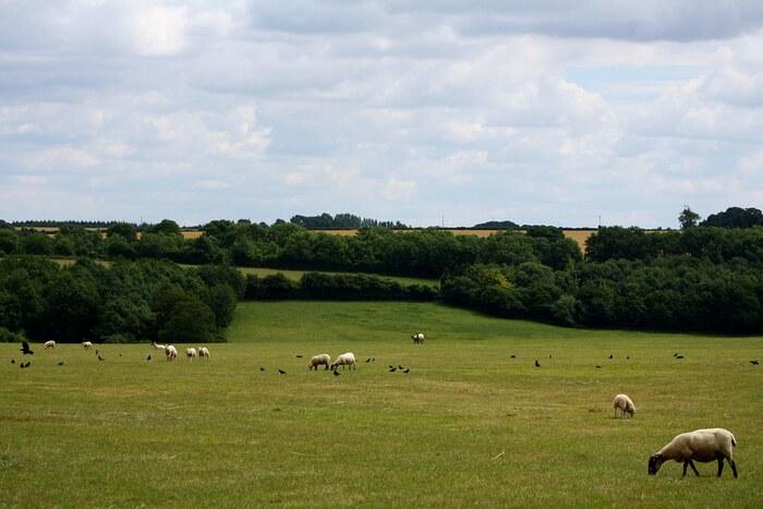 「羊の丘」という意味を持つコッツウォルズ地方は、その名の通り、緑豊かな丘陵地帯に白い羊たちが牧草を食んでいるのどかな風景が広がるエリアです。