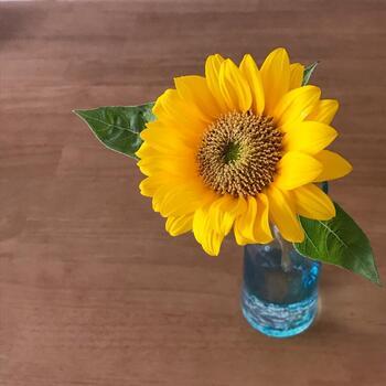 ひまわりは一輪でもバランスよくまとめることができるお花です。一輪で飾ると、ブーケにするよりも清楚な雰囲気が強まります。