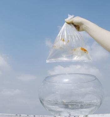観賞用の魚などを飼うための水槽や鉢を長年設置していると、やはり水垢が付着することも。水槽の場合、ガラス製なのかアクリル製なのかによって掃除の仕方も変わります。ガラスなら擦り洗いもできますが、アクリルの場合は傷が付いてしまうため、クエン酸やセスキ炭酸ソーダを使うのがおすすめです。