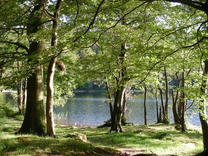 豊かな緑に覆われた山々と湖を眺めながら、しんと静かなグラスミア湖畔の遊歩道を歩いてみるのもおすすめです。
