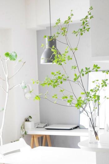ドウダンツツジという夏に人気の枝もの。夏の期間限定でお迎えして、飾ってみるのもおすすめです。小ぶりの葉っぱが涼し気で、夏らしいインテリアにしてくれます。管理をしっかりすると長持ちするんですよ。