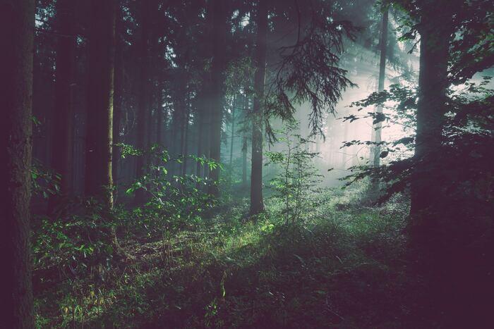 森林浴をしているような樹木系の香りは気持ちを鎮め、リラックスしたい時におすすめです。  ・ユーカリ ・ティートゥリー ・サイプレス ・ローズウッド