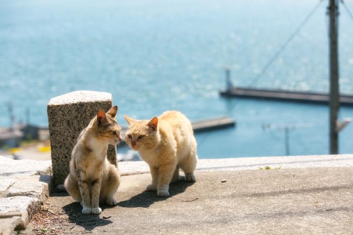 男木島は昔懐かしい漁港や昭和レトロな雰囲気の古民家など、絵になるスポットがあちこちにあります。その中に可愛らしい猫がいるとなれば、写真好きにはたまらないフォトスポットになりますよね。漁港だけではなく、いろいろなところで猫たちに会うことができますよ。