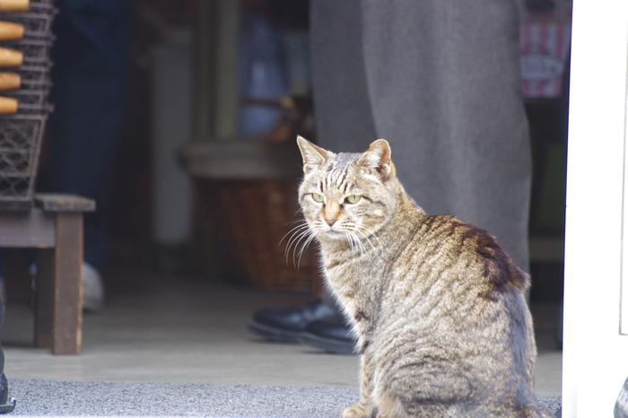 もちろん、本物の猫もたくさんいます。細い路地が多い谷中エリアは猫たちにとっても恰好のお散歩場所。下町の情緒あふれる景色に馴染む猫たちはどこか貫禄があります。静かに猫たちを眺めてあげましょう。