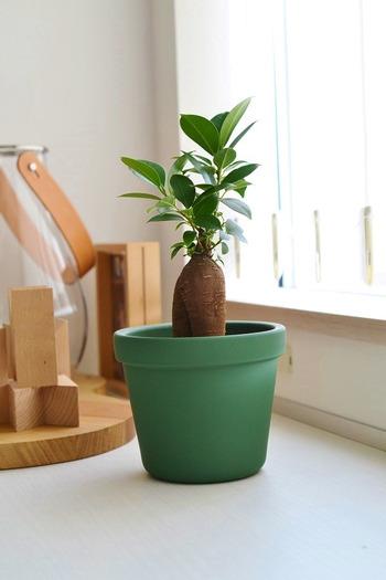もう枯らさないで!夏の観葉植物の上手な育て方&選び方、素敵な飾り方もご紹介♪
