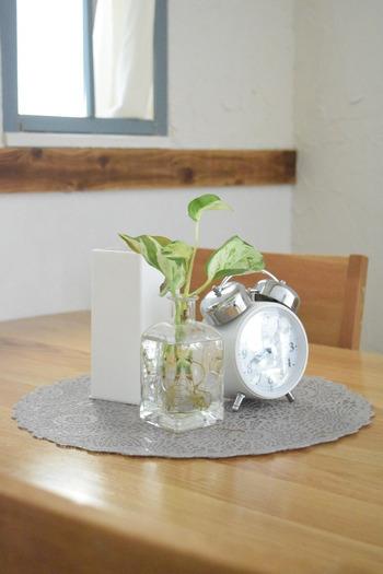 少しだけ切ったポトスを活けてテーブルに飾ると清涼感が感じられます。来客がある時のテーブルコーディネートにも役立つアイデア。ガラス製のフラワーベースだと涼し気で◎