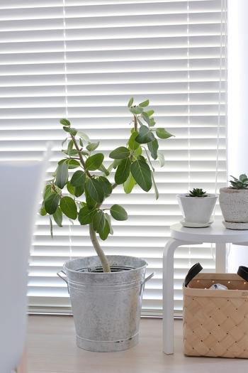 ブリキ素材プランターカバーを使っている実例。ちょっと無骨な印象のものでも、イキイキとした植物とのコーディネートなら、スタイリッシュに見えますね♪