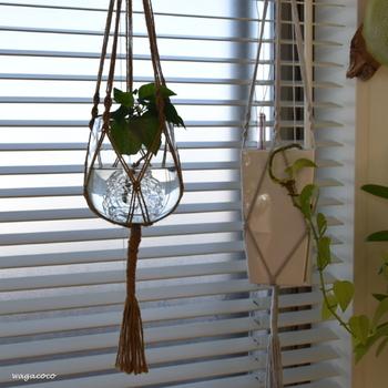 ガラスのハンギングプランターを窓辺に吊るしている実例。水とガラスが外からの光に透けてとってもきれい!軽やかな印象なので吊るしていても圧迫感がなく、クリアな素材感は夏にぴったり。