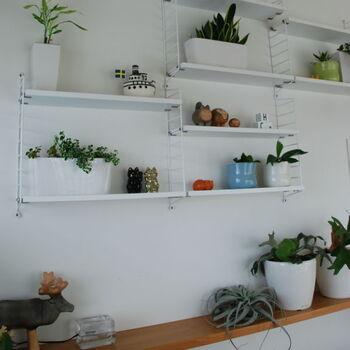 ウォールラックに小ぶりの植物たちを配置して、素敵なディスプレイコーナーにしています。お気に入りのオブジェなどと一緒に飾ると、よく目がいく場所になるので植物の変化にもすぐ気付けそう。