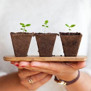夏に観葉植物が枯れる原因は水やり・日光・室温が関係しています。それぞれ気温が高くなることによって、植物の元気がなくなる状態につながっていきます。