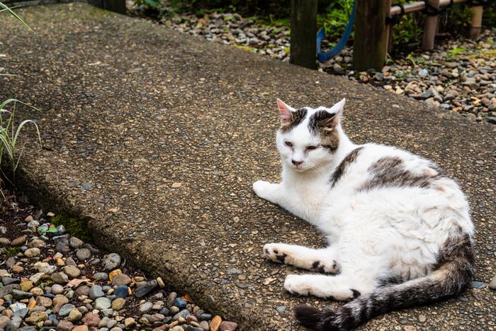 護国寺には仁王門や惣門、多宝塔など見どころもたくさん。のんびり寝そべる猫ちゃんを探しながら、長い時の流れを感じてみるのも素敵ですね。