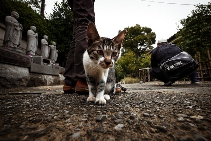 神聖な場所であるお寺でも、猫たちはのんびりマイペース。私たち人間は、礼儀を重んじ、ルールを守って心静かに猫たちに会いにいきましょう。